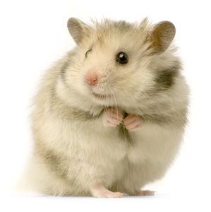 Hamster Pic .jpg